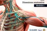 Corsi di Dissezione anatomica, Modulo 1: collo, arto superiore in toto e apparato cardio-respiratorio