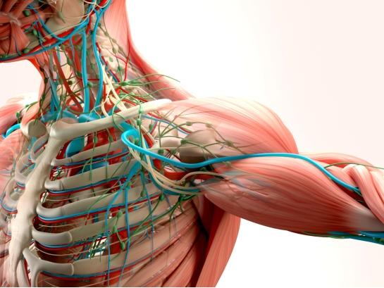 Dopo il successo dello scorso anno, nuovi corsi di Dissezione Anatomica in programma
