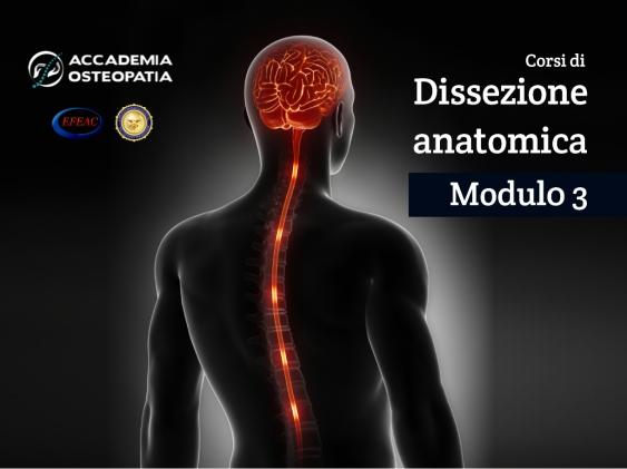 Corsi di Dissezione anatomica, Modulo 3: sistema nervoso centrale, colonna vertebrale in toto, pavimento pelvico ed organi genitali