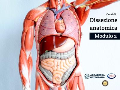 Corsi di Dissezione anatomica, Modulo 2: addome, bacino, arto inferiore in toto e organi viscerali